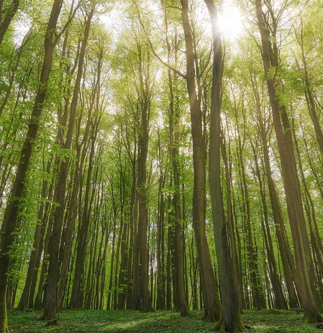 Nachhaltigkeit liegt uns als Bewohner des Naturparadieses Rügen sehr am Herzen. Hier erfahren Sie mehr über unseren Beitrag zu dem wichtigen Thema.